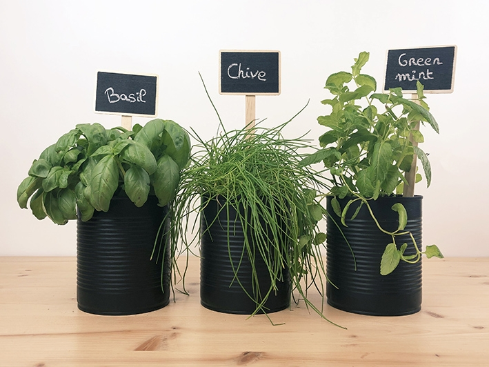 DIY mini garden aromatic herbs chives mint basil tin cans recycle